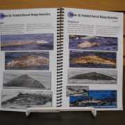 Spiral bound for easy of turn